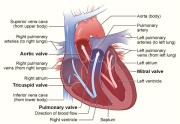 Mitral-Balloon-Valvuloplasty